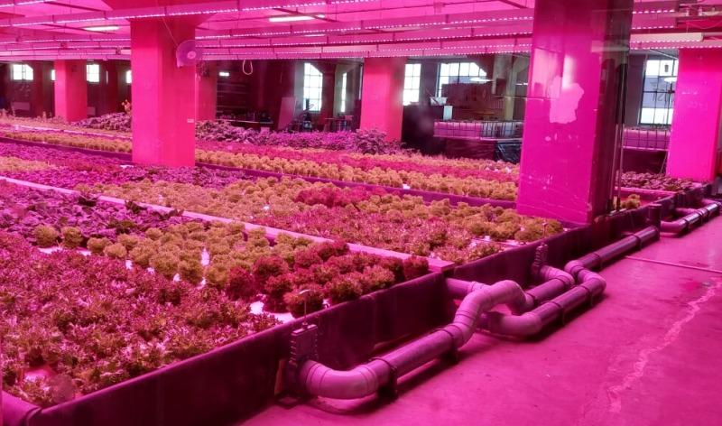 DuurzaameKost aquaponics urban farming system
