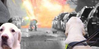 de CLiCK_ service dogs_ illegal fireworks