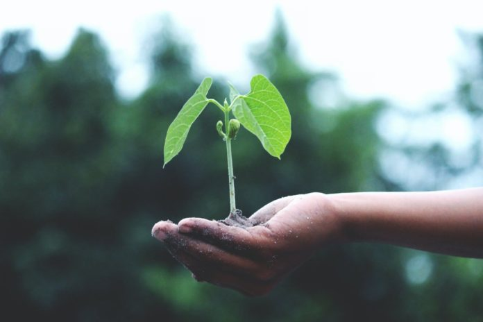 plants, growth, sustainability