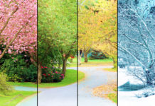 landscape in four seasons