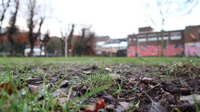 field, grass, park,